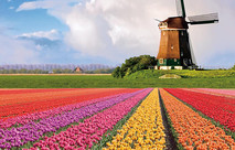 Tulips and Windmills - 10 Days Amsterdam to Antwerp with Uniworld River Cruises